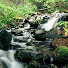 Berig dig selv med skønne naturoplevelser